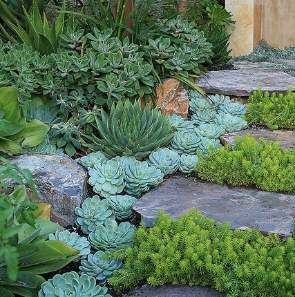 Amazing succulents